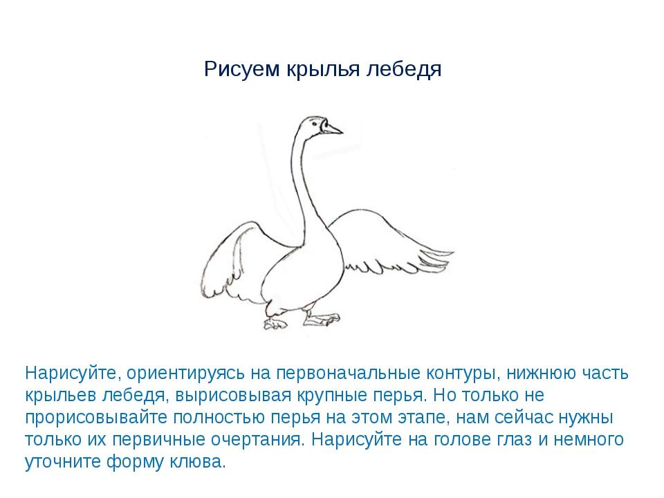 Рисуем крылья лебедя Нарисуйте, ориентируясь на первоначальные контуры, нижню...