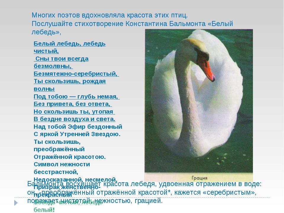 Многих поэтов вдохновляла красота этих птиц. Послушайте стихотворение Констан...