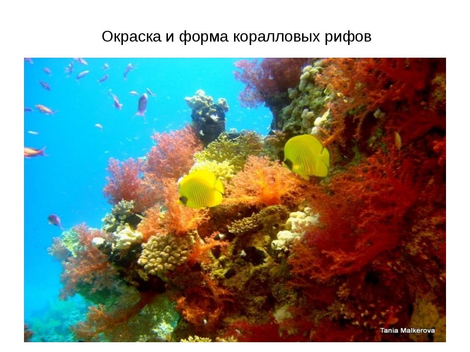 Окраска и форма коралловых рифов