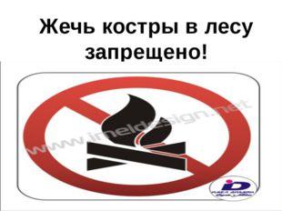Жечь костры в лесу запрещено!