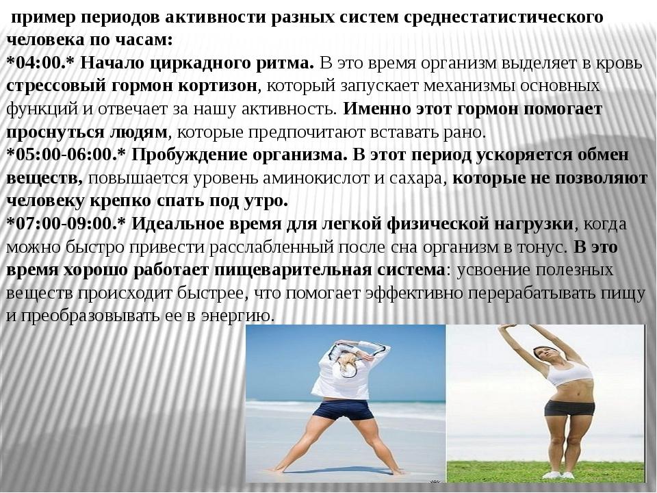 пример периодов активности разных систем среднестатистического человека по ч...