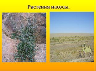 Растения насосы.
