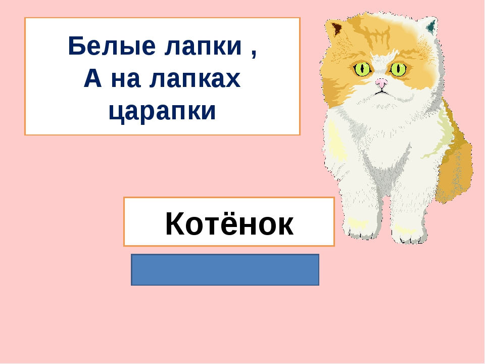 Белые лапки , А на лапках царапки Котёнок