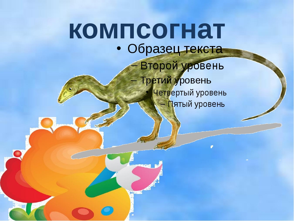 компсогнат