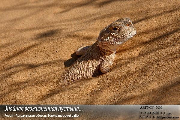 http://img4.tourbina.ru/photos.3/9/8/981740/big.photo/Pustynya-pesok-yatstcheritsy.jpg