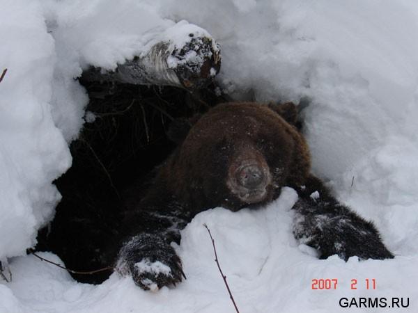 http://www.garms.ru/pics/hunt/hunt_1045d092146505a.jpg