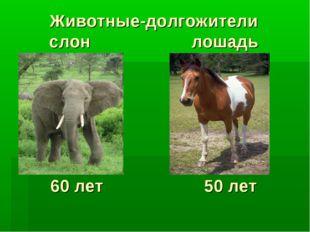 Животные-долгожители слон лошадь 60 лет 50 лет