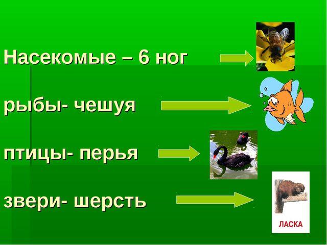 Насекомые – 6 ног рыбы- чешуя птицы- перья звери- шерсть