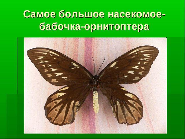 Самое большое насекомое- бабочка-орнитоптера