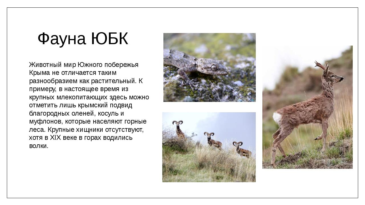 Фауна ЮБК Животный мир Южного побережья Крыма не отличается таким разнообрази...