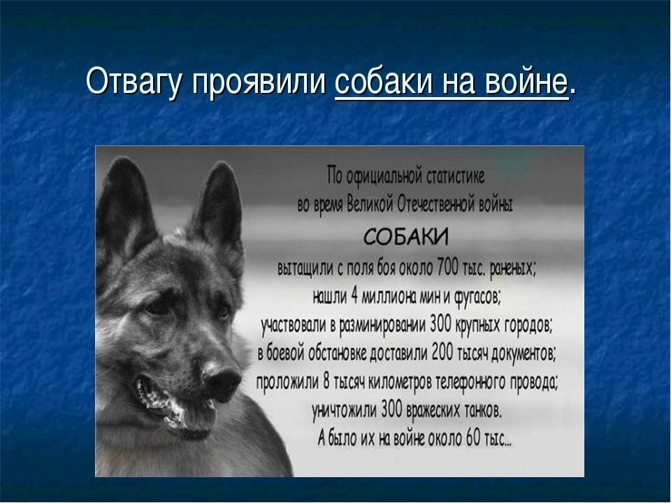 Отвагу проявили собаки на войне. .