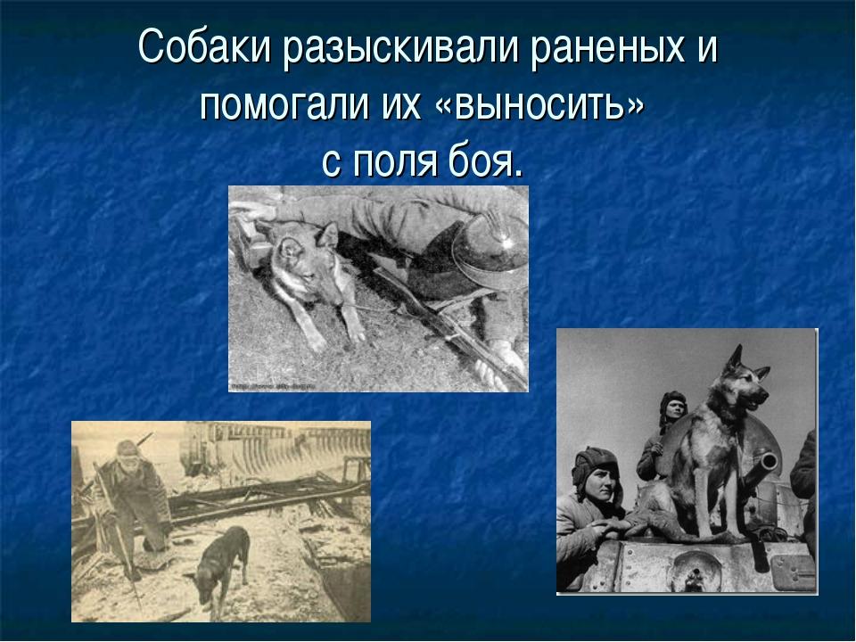 Собаки разыскивали раненых и помогали их «выносить» с поля боя. .