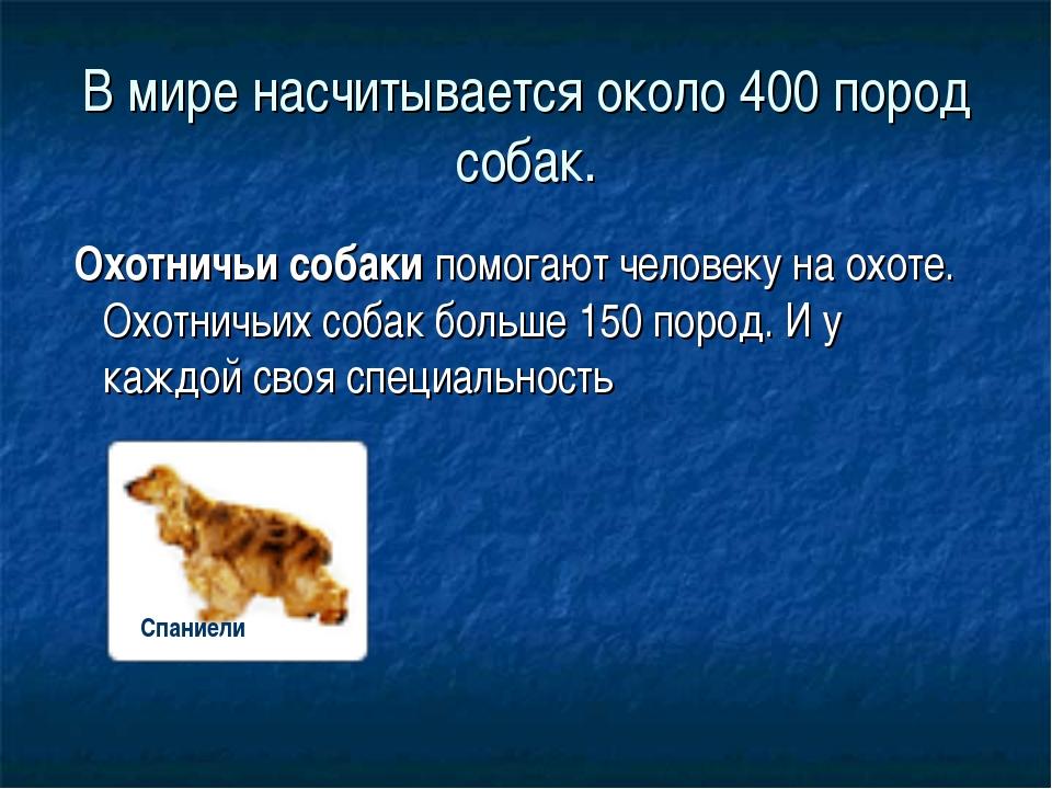 В мире насчитывается около 400 пород собак. Охотничьи собакипомогают челове...