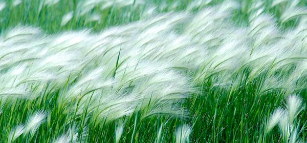 Ветер - Беларусь - моя страна