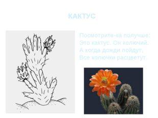 КАКТУС Посмотрите-ка получше: Это кактус. Он колючий. А когда дожди пойдут, В
