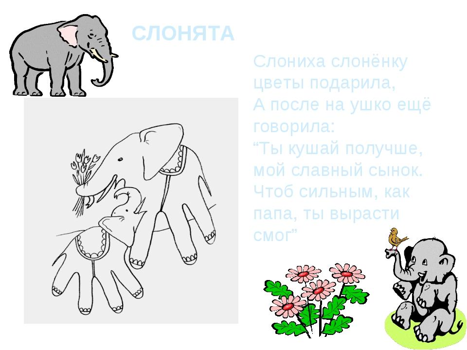 """СЛОНЯТА Слониха слонёнку цветы подарила, А после на ушко ещё говорила: """"Ты ку..."""