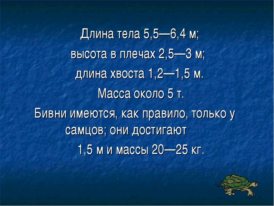 Длина тела 5,5—6,4 м; высота в плечах 2,5—3 м; длина хвоста 1,2—1,5 м. Масса...