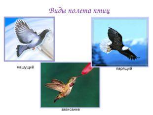 Виды полета птиц машущий зависание парящий