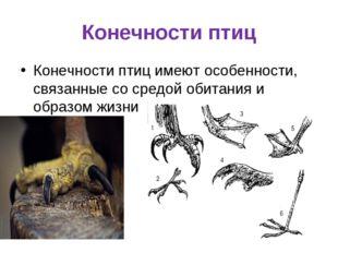Конечности птиц Конечности птиц имеют особенности, связанные со средой обитан