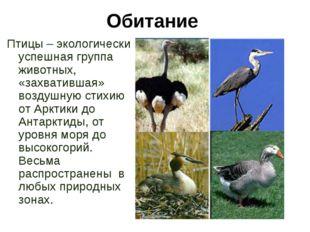 Обитание Птицы – экологически успешная группа животных, «захватившая» воздушн