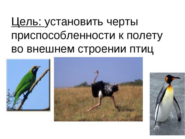 Цель: установить черты приспособленности к полету во внешнем строении птиц