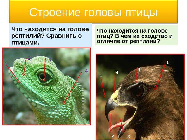 Что находится на голове рептилий? Сравнить с птицами. Что находится на голове...