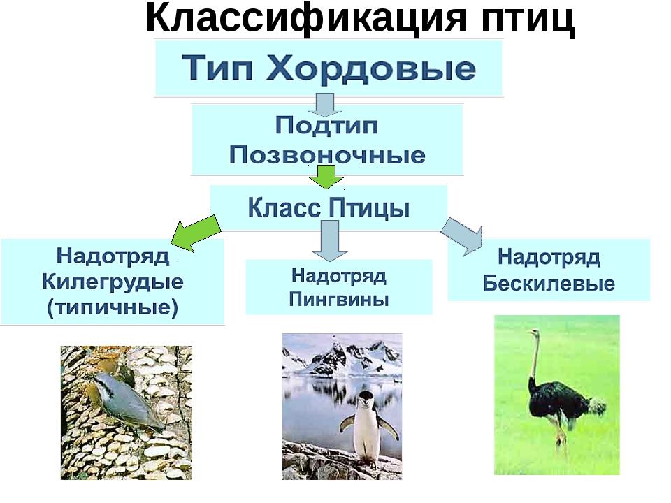 Классификация птиц