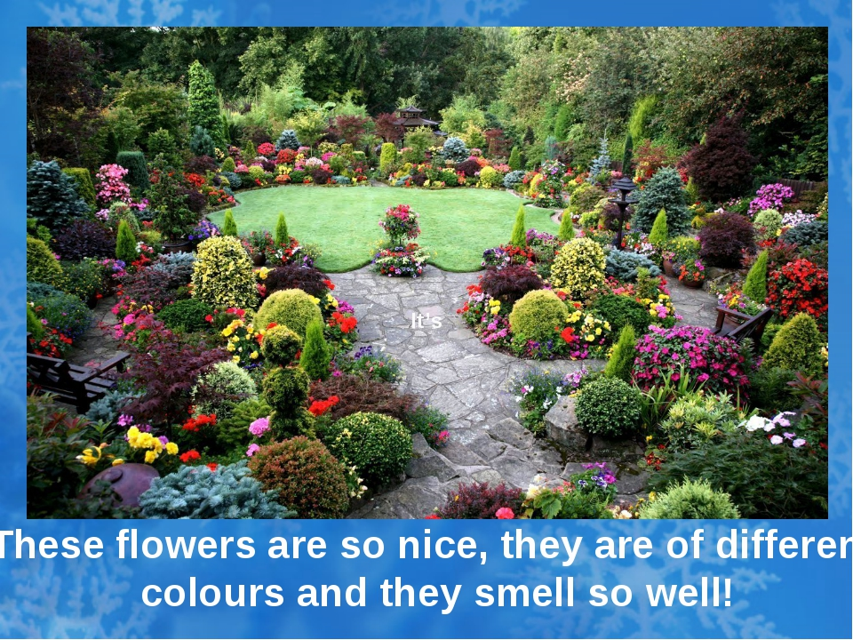 It's These flowers are so nice, they are of different colours and they smell...