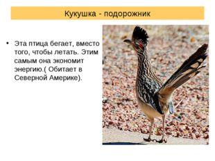 Кукушка - подорожник Эта птица бегает, вместо того, чтобы летать. Этим самым