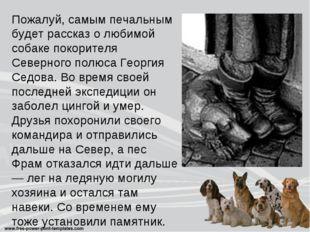 Пожалуй, самым печальным будет рассказ о любимой собаке покорителя Северного