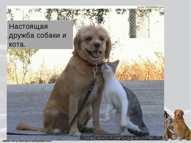 Настоящая дружба собаки и кота.