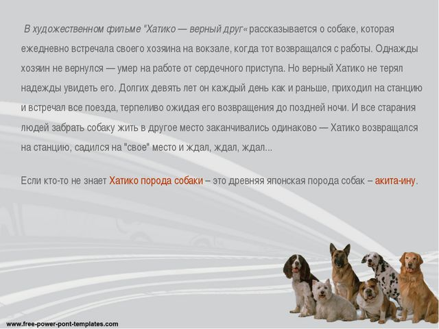 """В художественном фильме """"Хатико — верный друг« рассказывается о собаке, кото..."""
