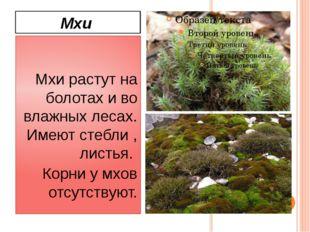 Мхи Мхи растут на болотах и во влажных лесах. Имеют стебли , листья. Корни у