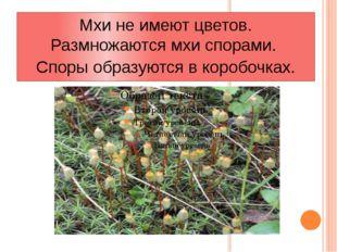 Мхи не имеют цветов. Размножаются мхи спорами. Споры образуются в коробочках.
