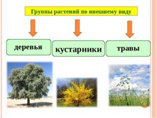 Группы растений по внешнему виду травы кустарники деревья