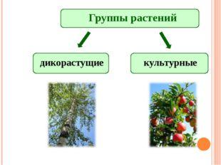 Группы растений дикорастущие культурные
