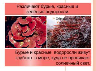 Различают бурые, красные и зелёные водоросли Бурые и красные водоросли живут