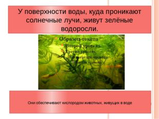 У поверхности воды, куда проникают солнечные лучи, живут зелёные водоросли. О