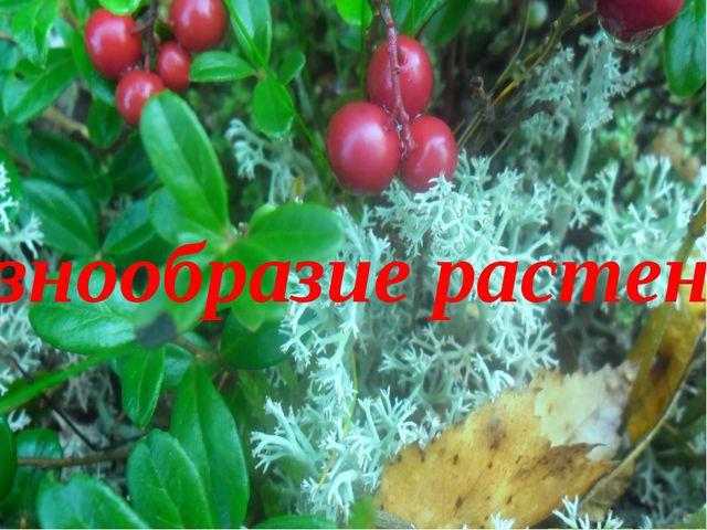 Разнообразие растений.