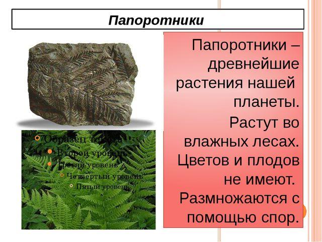 Папоротники Папоротники – древнейшие растения нашей планеты. Растут во влажны...