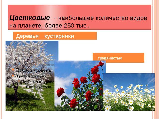Цветковые - наибольшее количество видов на планете, более 250 тыс.. Деревья к...