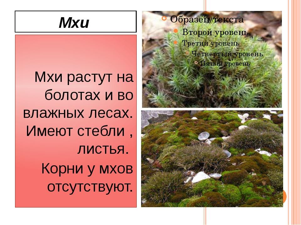 Мхи Мхи растут на болотах и во влажных лесах. Имеют стебли , листья. Корни у...