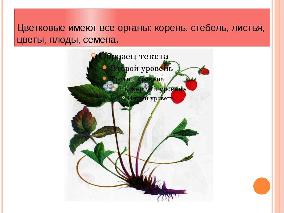 Цветковые имеют все органы: корень, стебель, листья, цветы, плоды, семена.