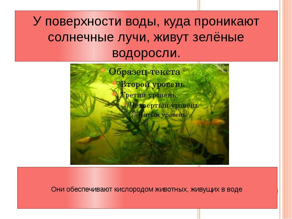 У поверхности воды, куда проникают солнечные лучи, живут зелёные водоросли. О...