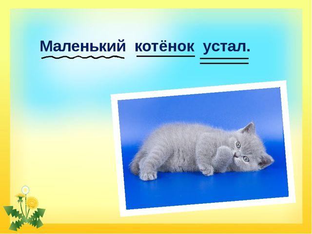 Маленький котёнок устал. FokinaLida.75@mail.ru