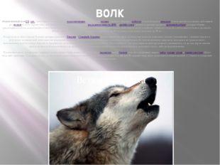 волк обыкновенный волк[1](лат.Canis lupus) — вид хищныхмлекопитающихиз с