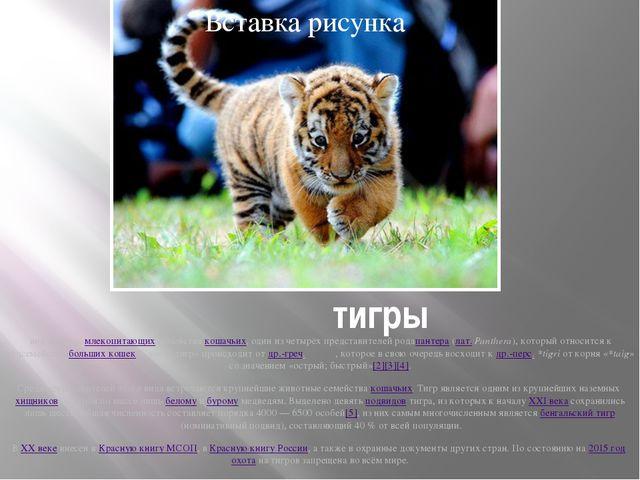 тигры вид хищныхмлекопитающихсемействакошачьих, один из четырёх представ...