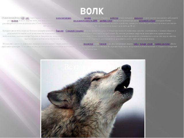 волк обыкновенный волк[1](лат.Canis lupus) — вид хищныхмлекопитающихиз с...