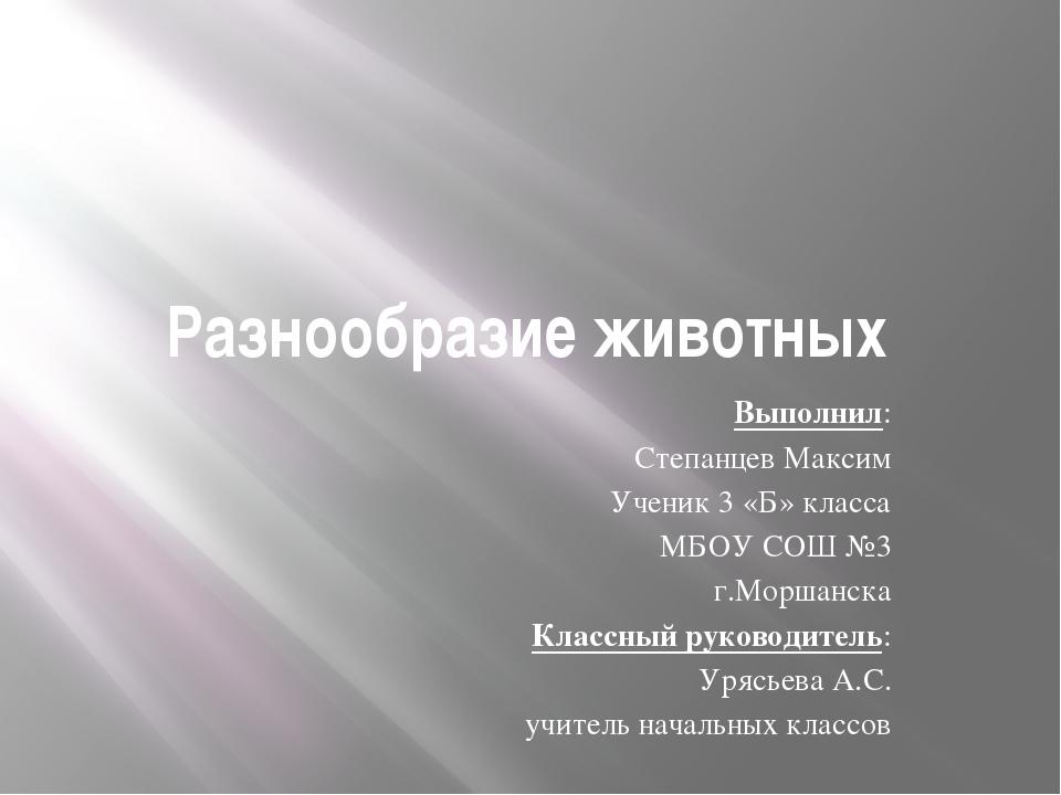Разнообразие животных Выполнил: Степанцев Максим Ученик 3 «Б» класса МБОУ СОШ...