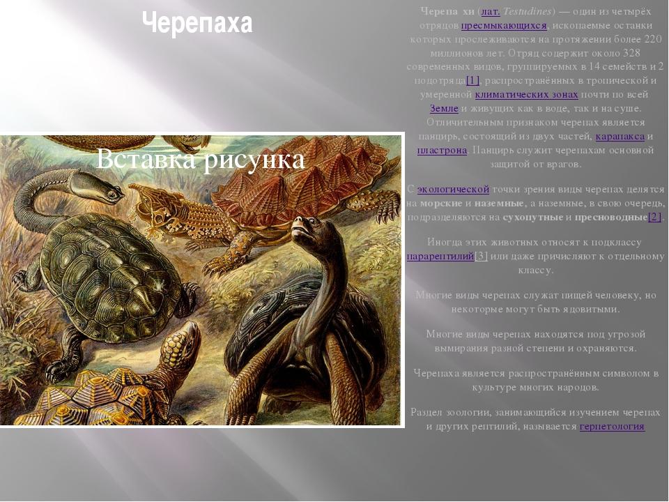 Черепаха Черепа́хи(лат.Testudines)— один из четырёх отрядовпресмыкающихся...